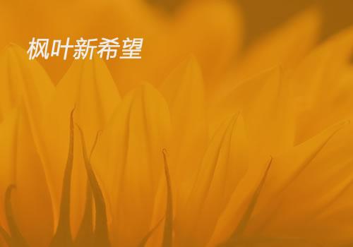 新希望教育-武汉网站设计